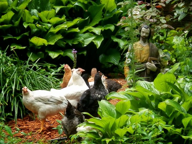 Run Chicken Run: Choosing the Narrow Gate